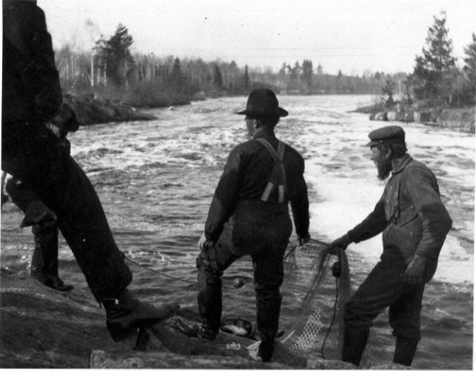 Fish & Game men netting walleye at the Pike river Hatchery, circa—1912.